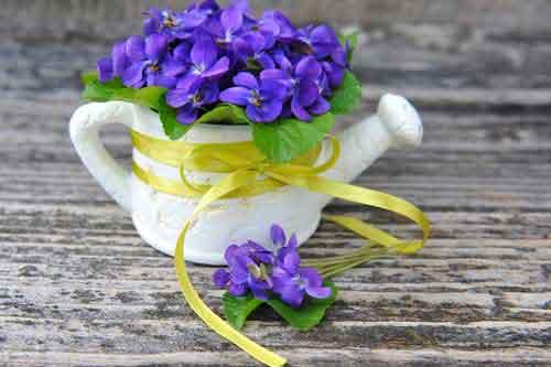 13 Hochzeitstag Veilchenhochzeit Geschenke Spruche Gluckwunsche